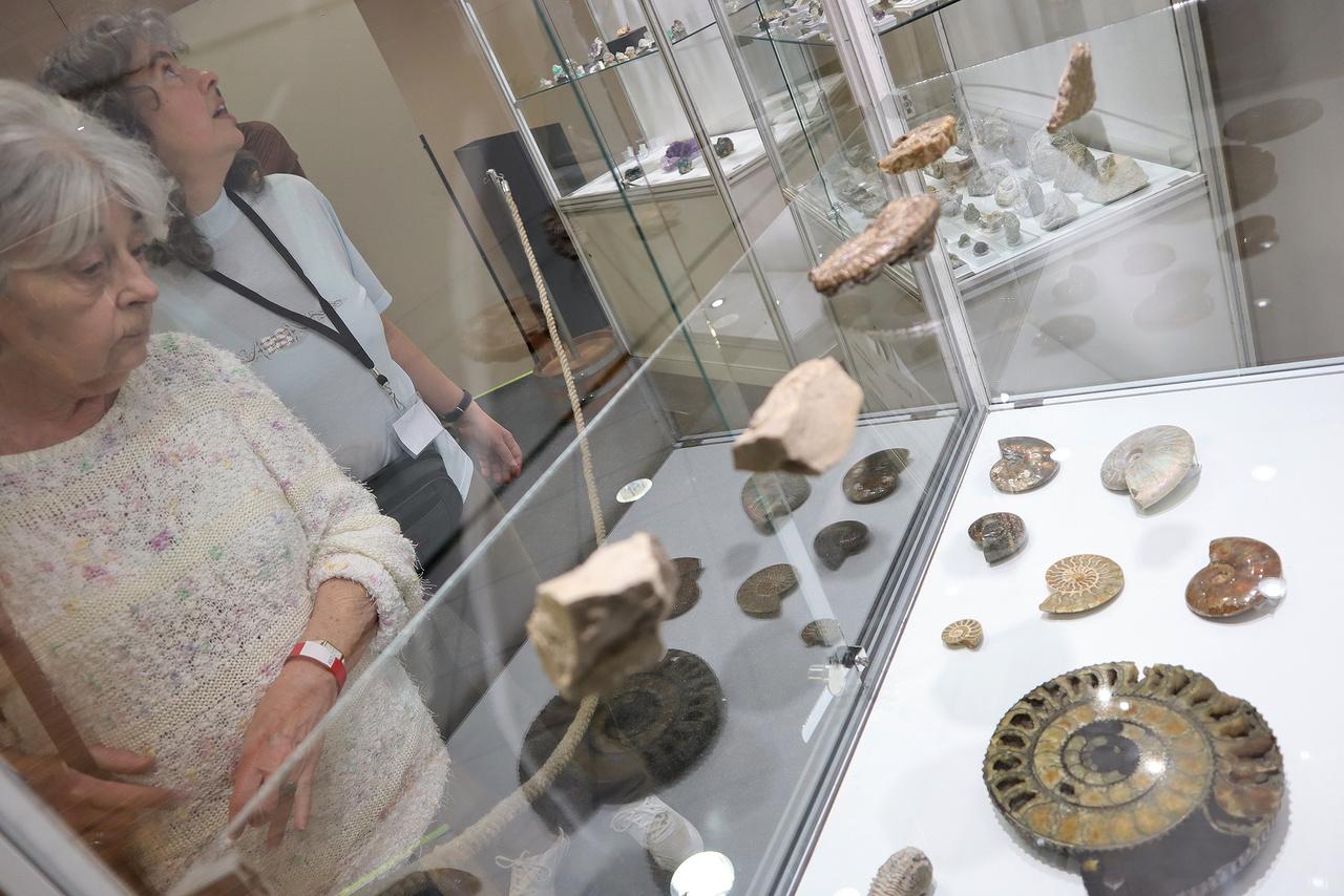 2018-ban az év ősmaradványának egy triász időszaki ammoniteszt, a Balatonites balatonicust választották közönségszavazáson.