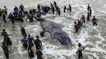 A bálnának már nincs szüksége a segítségünkre
