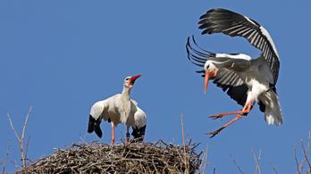 Jó hírrel szolgált a gólyáknak az E.ON