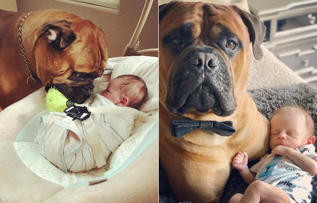 kutya kisbaba kapcsolata