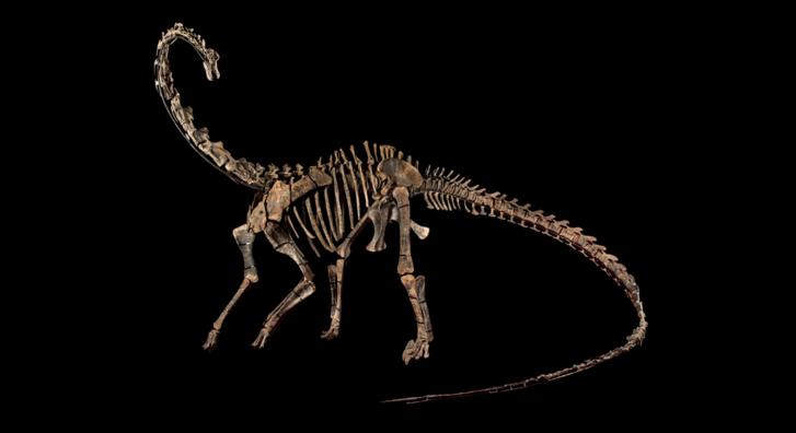 A növényevő Diplodocus