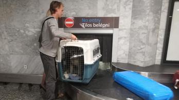 Feltette a repülőre a kutyát, de az nem érkezett meg Budapestre