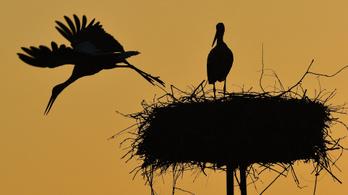 A betegségek elől is költöznek a költöző madarak