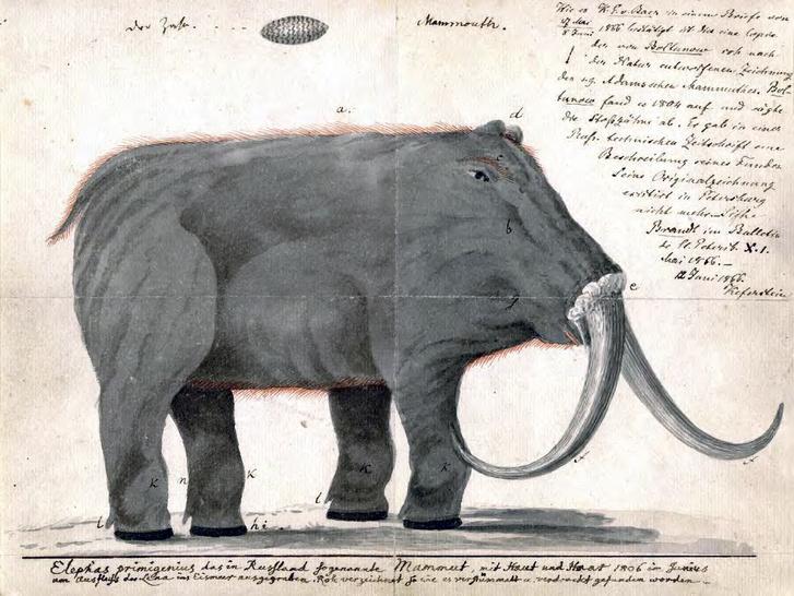 Furán görbülő mamutfantáziák: egy 1806-os ábrázolás