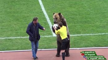 Csak Oroszországban: betanított medve adja át a meccslabdát a bírónak