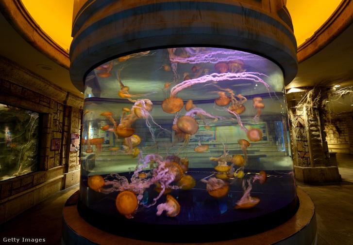 Akvárium egy Las Vegas-i kaszinóban