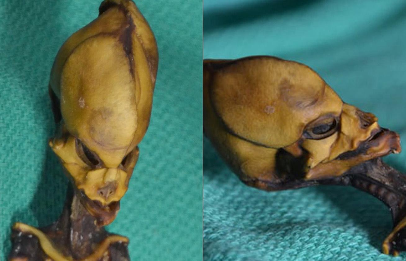 alien csontvaz 5