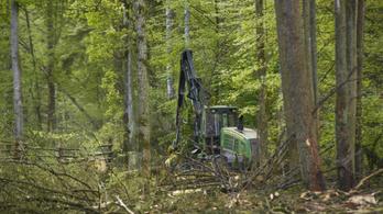 Európai Bíróság: Jogsértő a białowieżai erdőben folyó fakitermelés