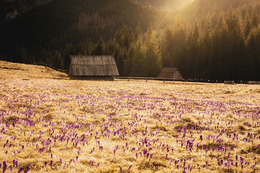 Varázslatosan szép a tavasz a Tátrában: így ébredezik a természet