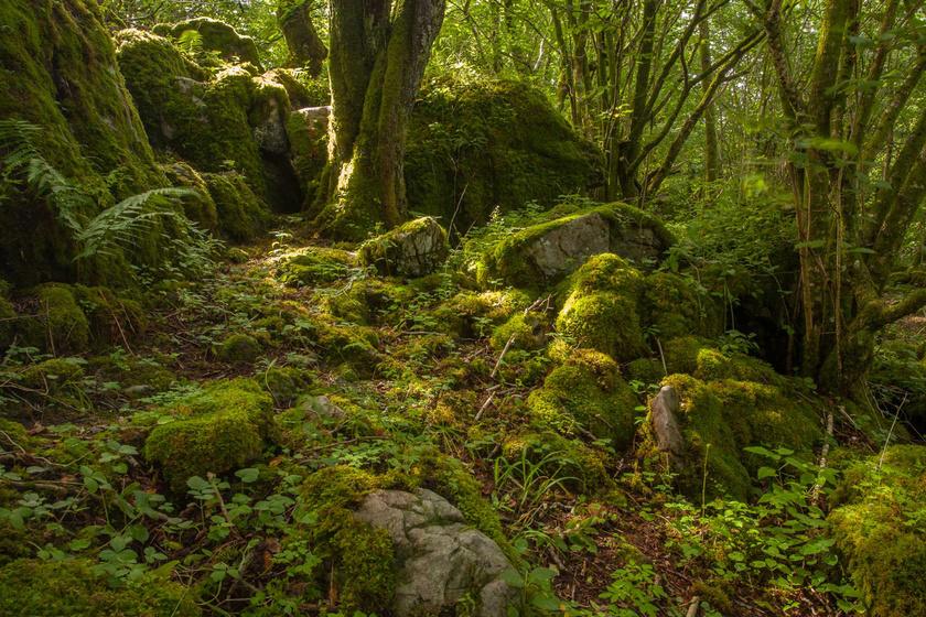 9 sűrű meseerdő, nagyon zöld mohával: olyan, mintha tündérek laknák