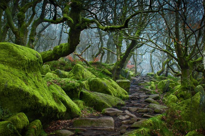 Az angliai Derbyshire-ben, a Peak District nemzeti parkban a Burbage Brook-patak csodaszép völgye a Padley Gorge. Az erdő egy ritka, fennmaradt terület, ahol nyír- és bükkfák élnek együtt, sőt, három ritka zuzmófaj is itt talált menedékre.
