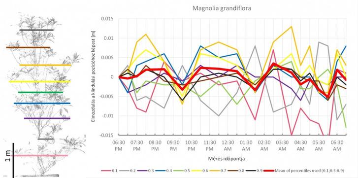 Az ábra bal oldalán a magnólia háromdimenziós modelljének oldalnézete látható. A színes vonalak jelölik azokat a magassági határokat, amelyek a pontok egytizedét tartalmazó tartományokat elválasztják. Ahogy a fa alakja az éjszaka folyamán megváltozott, ezek a tartományok is elmozdultak – ez látható a jobb oldalon. A skála méterben van megadva, az elmozdulás tehát +/- 1 cm körüli. A képen látható, hogy az éjszaka folyamán három, egyenként kb. négy óra hosszú elmozdulási ciklus történt.