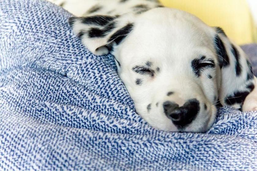 Egy apróság, amit nem lehet nem észrevenni a kutya fotóin: ezért követik olyan sokan