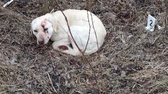 Szívességből agyonverte volna a barátja kutyáját