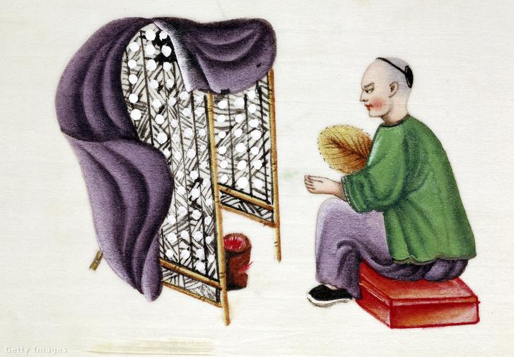 A selyemhernyók száradó gubóit őrző férfi