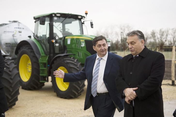 Mészáros Lőrinc és Orbán Viktor a Búzakalász 66 Felcsút Kft. bányavölgyi mangalicatelepének avatásán a Fejér megyei Alcsútdobozon 2014. november 18-án
