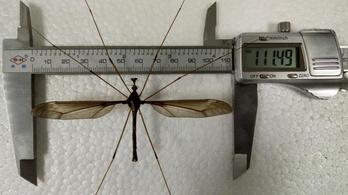 11 centis szúnyogot fedeztek fel Kínában