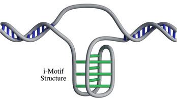 Új struktúrát találtak az emberi dns-ben