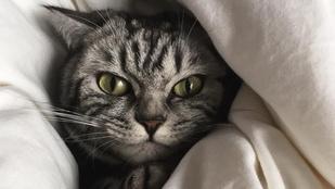 Erzsi macskához magyar politikus is írt már verset