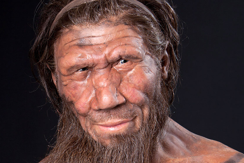 Lejtős arccsont, kiálló arc és orr, hátrahajló, lapos homlok, hátul kúpos, felül lapos koponya, széles orr jellemezte fejüket.