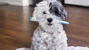 Lehet, hogy te is rossz helyen tartod a fogkefédet?