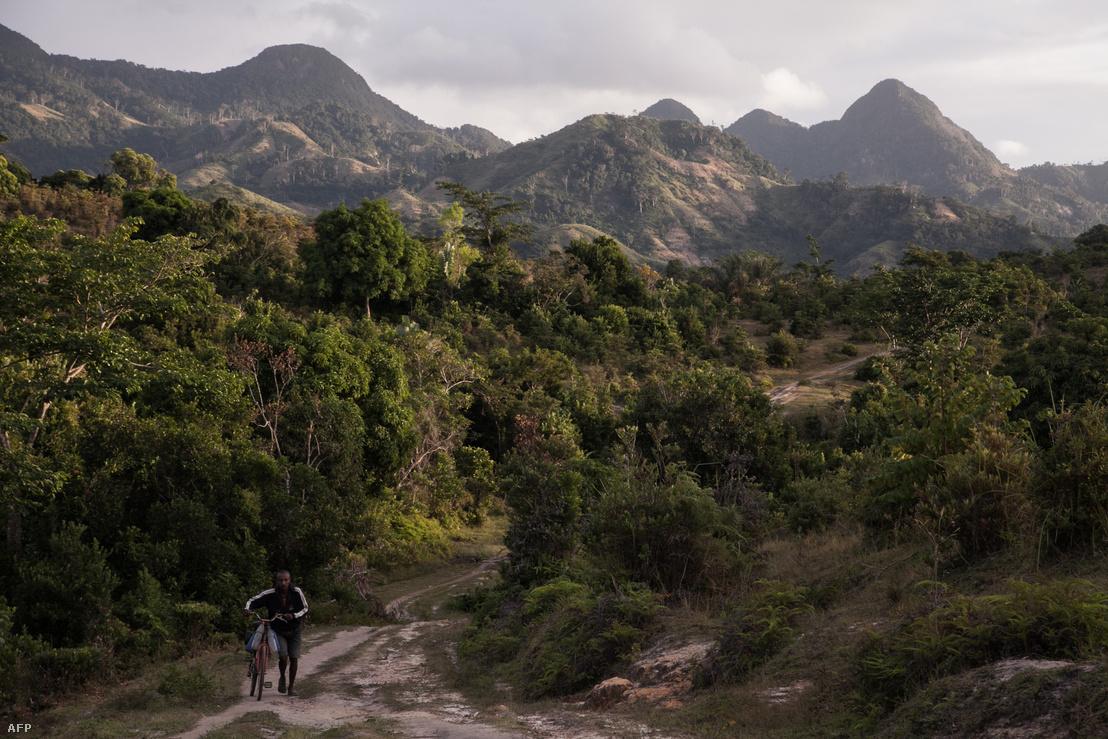 Munkás egy vanília ültetvény közelében Madagaszkáron