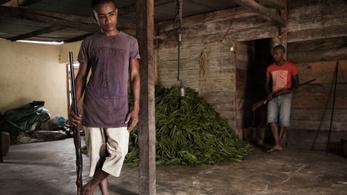 A korrupció és az erőszak miatt lesz méregdrága a vanília