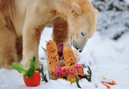 Knut szülinapi ebédje tavaly decemberben