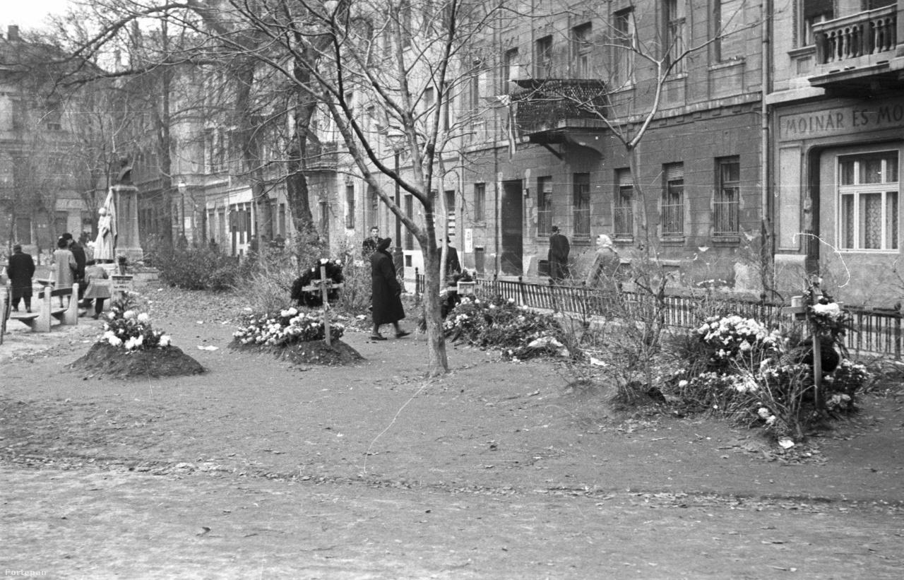 Az egykori főúri városi palota kertje  volt már sok minden, 1956-ban például átmenetileg temető. A legenda szerint a Károlyi kert helyén volt egykor Mátyás vadaskertje. Az első világháború után lett közpark, évtizedekig szabadtéri koncertek kedvelt helyszíne – ezt idézik fel majd a zeneművészetis  diákok koncertjei.  Pilisi Róza és más éjszakai pillangók nyomát keresve lehet időutazni a Magyar utcai hajdani vigalmi negyedbe, a gyerekek kertmakettet építhetnek és kipróbálható a csatornafedeles ruhafestés , bármit jelentsen is. Kinyit a Henszlmann Imre utca 7., az egyik legmenőbb Károlyi kertre néző erkéllyel.
