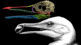 A madarak csőre valamikor pótkéz volt a szárnyakká alakult karok helyett
