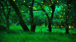 A fáknak is van szívverésük?