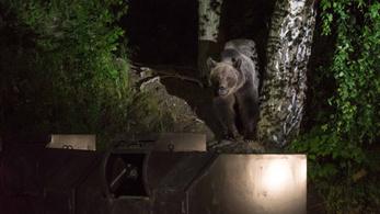 Kisgyerekre támadt egy medve Székelyföldön