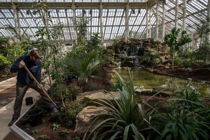 Scott Taylor főkertész növényeket ültet