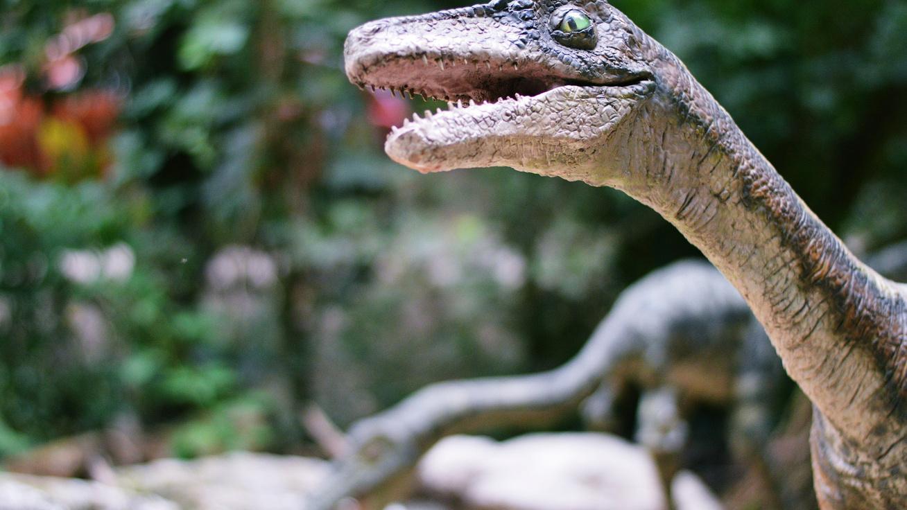 Mi a közös a velociraptorban és a keselyűben? Ezután más szemmel nézed a Jurassic Parkot