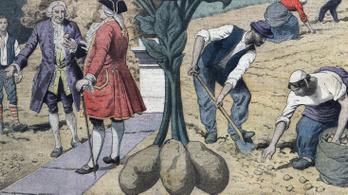 Franciaországban 24 éven át illegális volt a krumpli