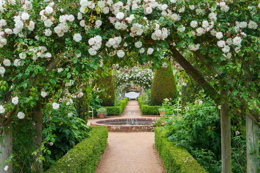 Hampshire-ben a Mottisfont kertje az egyik legnagyobb angol, klasszikus rózsafajokat tömörítő gyűjtemény. Egészen szeptemberig folyamatosan érdemes látogatni, sőt, a kertészetben ritka fajok is vásárolhatók.