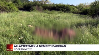 Beteg, vemhes tehenek maradványaira bukkantak a nemzeti parkban