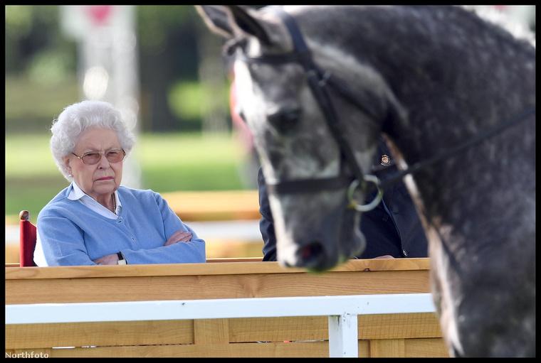 Közben persze jó alaposan meg is szemlélte a lovakat.