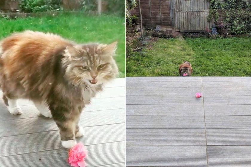 A lakótársai szóltak Rosie-nak, hogy a meglepetés a szomszéd macskától, Willow-tól ered.