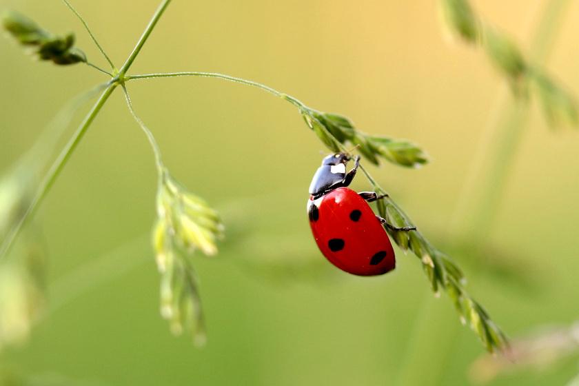 12 hasznos rovar a kertben: egészségesek lesznek a növények, ha őket látod a közelükben