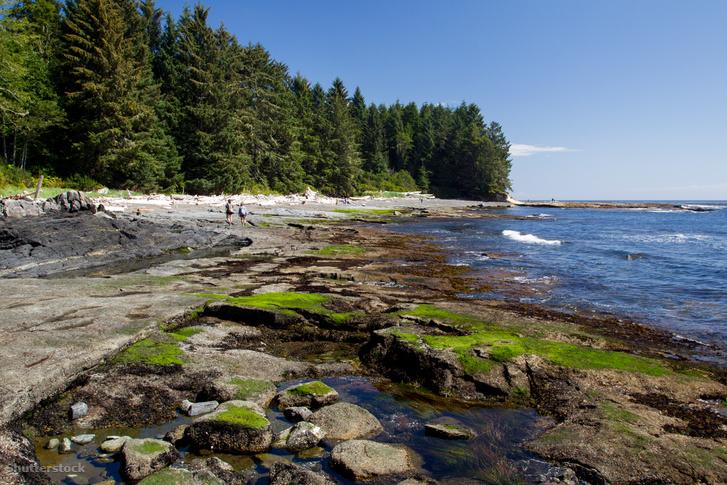 A Vancouver közelében található Botanical Beach