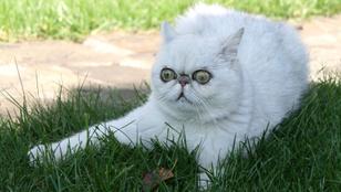 Jogilag eltiltották az énekléstől, mert fuldokló macska hangja van