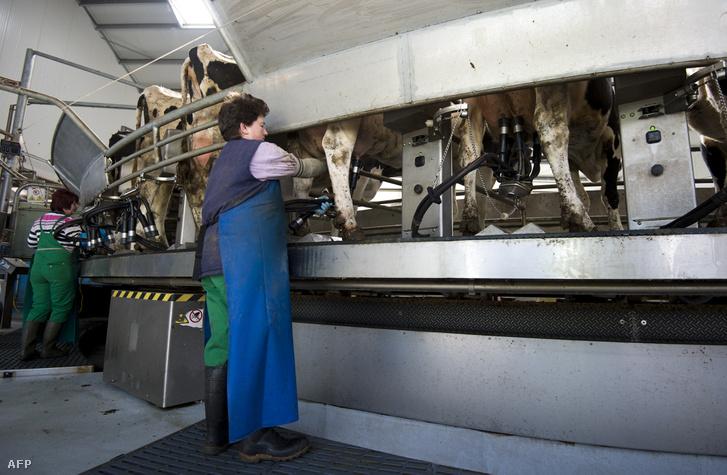 Dolgozók egy kenrbergi tejüzemben