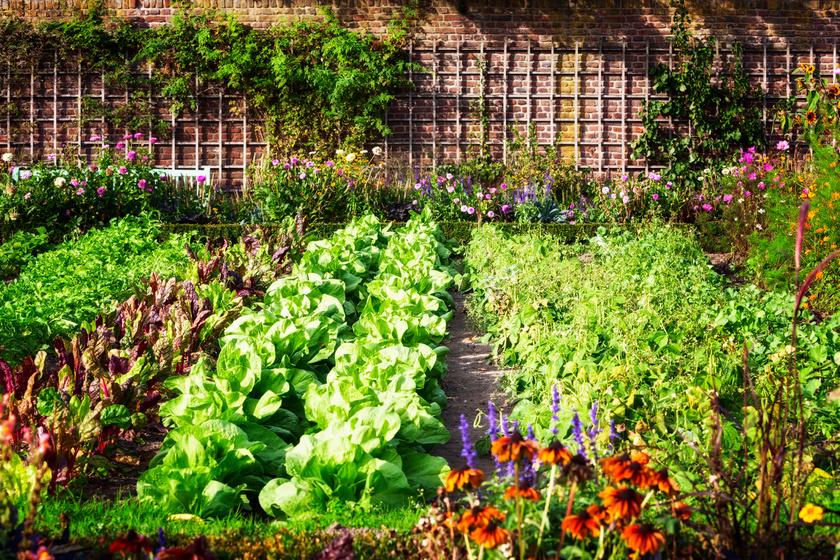 Permetezés nélkül szabadít meg a gyomoktól: a házi gyomirtó módszerektől pompás marad a kert