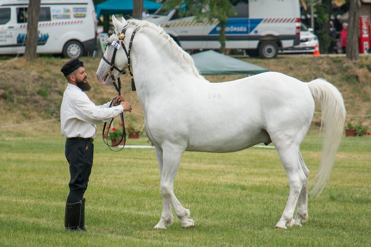 Csodálatosan szép lovak, de a bírálók látják a hibákat is