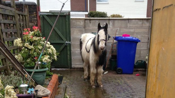 Szia, nagyi, rendeltem egy lovat az interneten