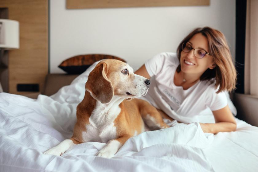 Elküldenek a szállodából, ha nem tartod be: a legfontosabb szabályok, ha kutyával utazol