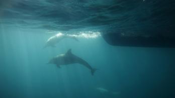 Jöttek az oroszok, és elpusztultak az ukrán haditengerészet harci delfinjei