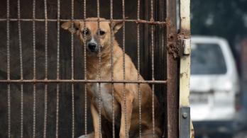 Kóbor kutyák 13 gyermeket martak halálra egy indiai faluban