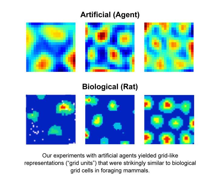 Hálósejtes alakzatok az AI-ban és emlősállatban